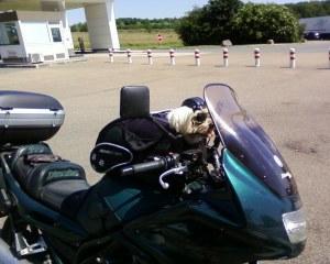 dog on bike